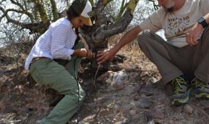 Read more: Desert Wildwater Study